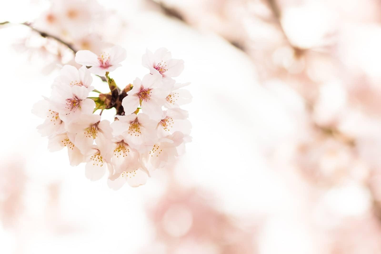 バイト 春休み 短期